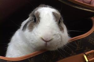 bunny-in-purse